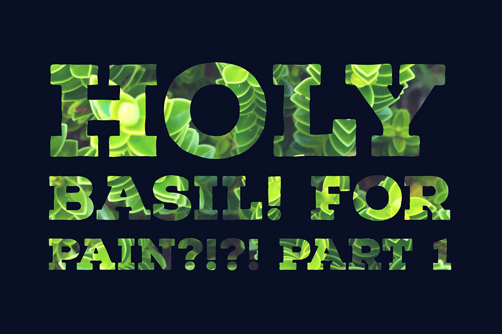 HOLY… Basil? Can Holy Basil Supplementation Help Regulate Cortisol and Reduce Anxiety? Part 1