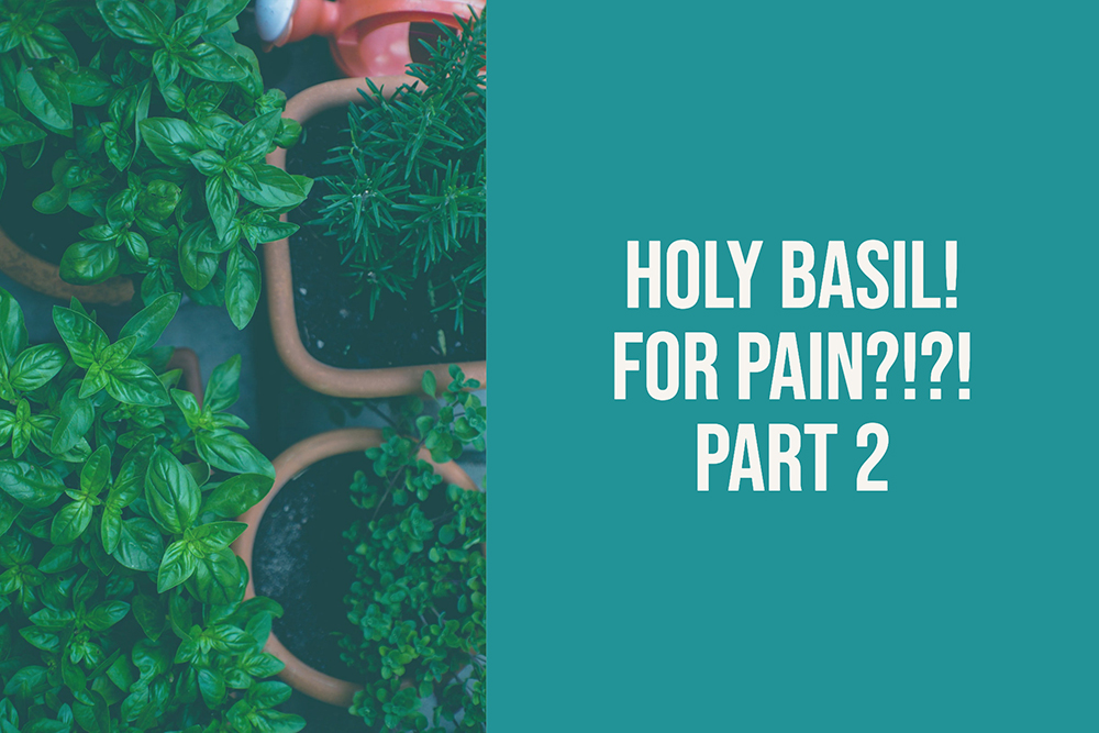 HOLY… Basil? Can Holy Basil Supplementation Help Regulate Cortisol and Reduce Anxiety? Part 2